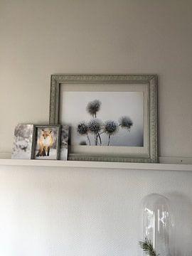 Kundenfoto: vos in de sneeuw von Pim Leijen