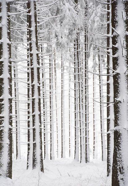 Winterbos van Gonnie van de Schans