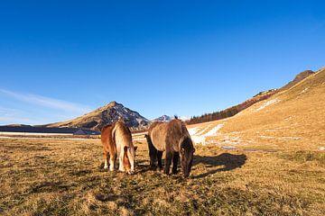 Isländische Pferde von Leon Eikenaar