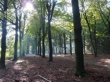Begin herfst von Ad Steenbergen
