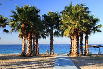 The Grouped Palmtrees sur Cornelis (Cees) Cornelissen