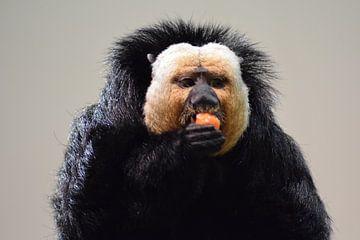 Essender Affe. von Marcha Meijer
