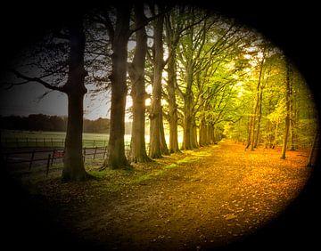 Bomen in een laan van Gerard de Ridder