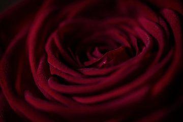 Roos sur Lonneke Prins