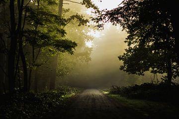 Mistig bospad van Bjorn Brekelmans