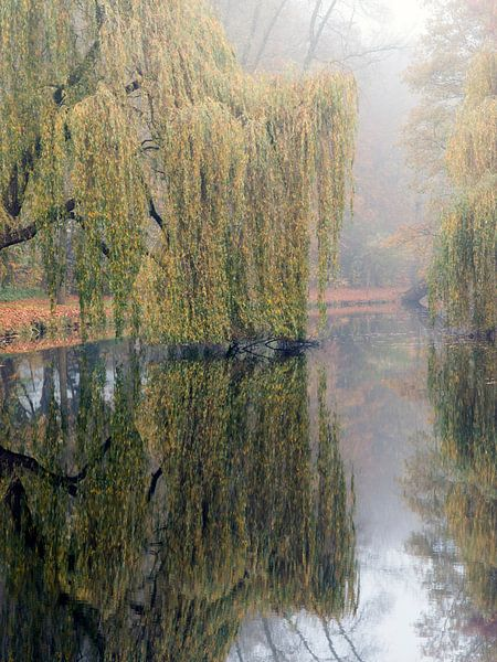 Spiegel natuur van Wilfred Roelofs