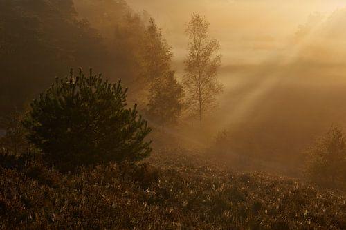Tegenlicht op een mistige ochtend