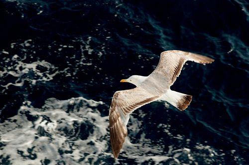 Zeemeeuw vliegt boven blauwe golven van de Middellandse zee in Griekenland