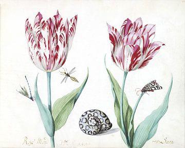 Twee tulpen met slak, nachtvlinder en twee insecten, Jacob Marrel - 1640 van