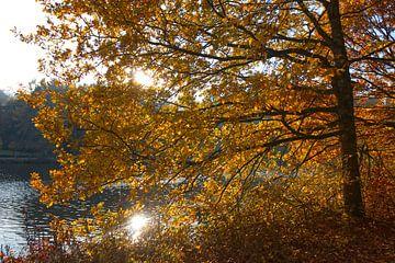 Herbst am Fluss von Carole Winchester