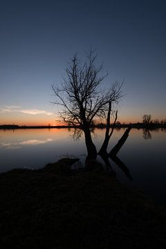 Boom en meertje bij zonsondergang van Moetwil en van Dijk - Fotografie