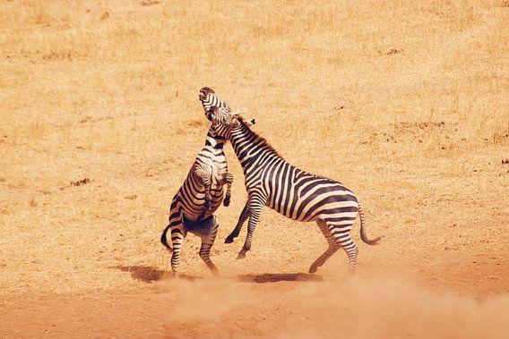 Vechtende Zebra's