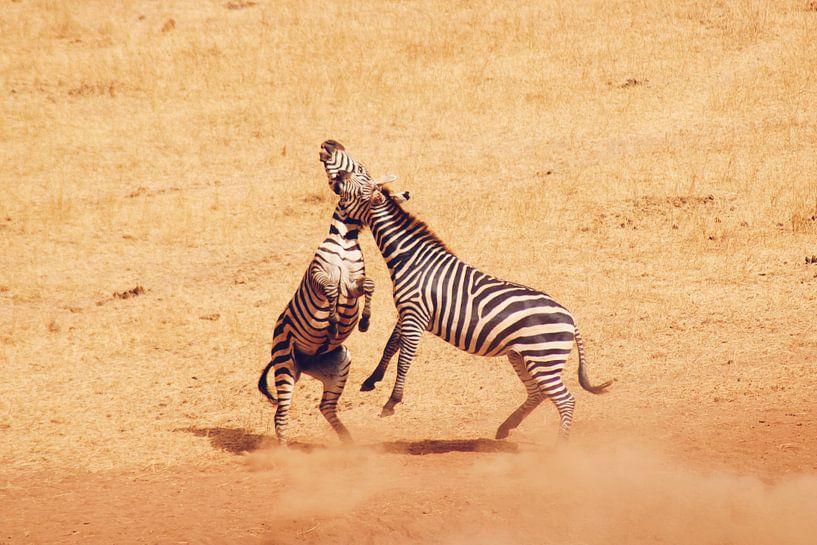 Vechtende Zebra's van Cinthia Mulders