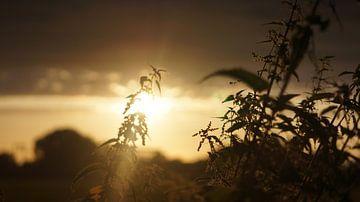 een prikkelig zonnetje van Lieke Elsinga