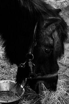 Paard von s Zenki