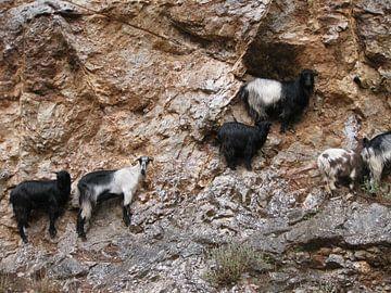 Geiten en rotswand sur Adrie Berg