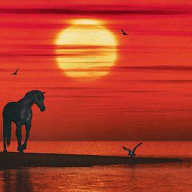 Un cheval et une mouette sur Jan Keteleer