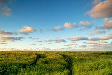 Groningerlandschap von Hollandse Kijker