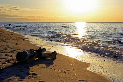 Strandgut von Ostsee Bilder