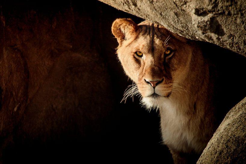 Lion in hiding van Geert Huberts