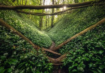 Boslook Jungle van Joris Pannemans - Loris Photography