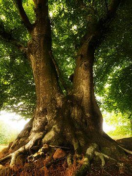 Old Tree van Jörg Hausmann