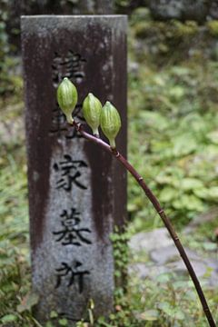 Tak met knoppen in Koya-San, Japan von Annemarie Arensen