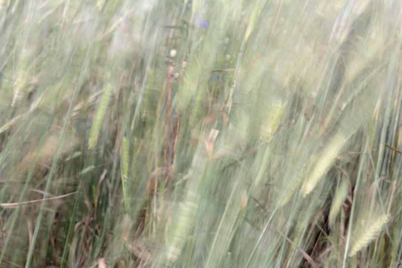 koren in de wind van Ronald Jansen