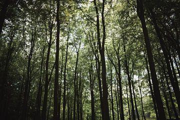 Bomen tot in de hemel van Winfred van den Bor