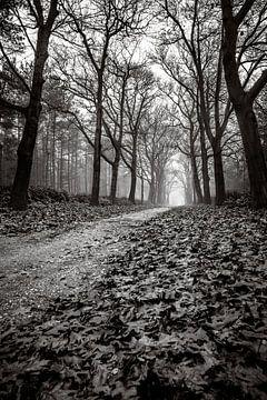 Het duistere bos von Jeffrey Van Zandbeek