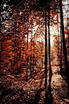 herfstkleuren van Wim Demortier