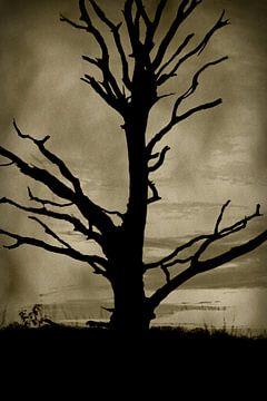 De boom van het leven van Dirk-Jan Steehouwer