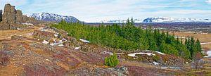 Panorama bos in IJsland