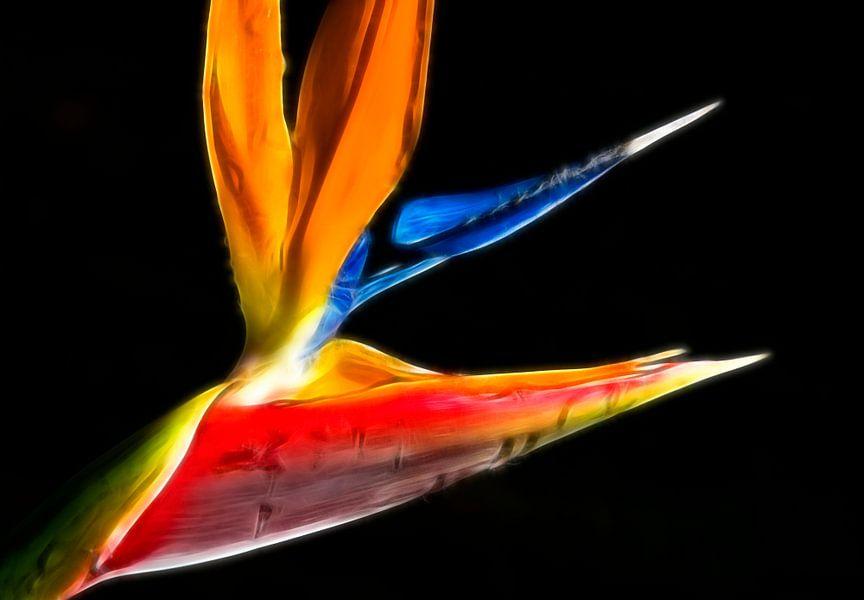 Papegaai bloem  van Marcel van Balken