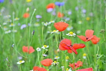 Coquelicots dans un champ de fleurs sauvages sur Jessica Berendsen