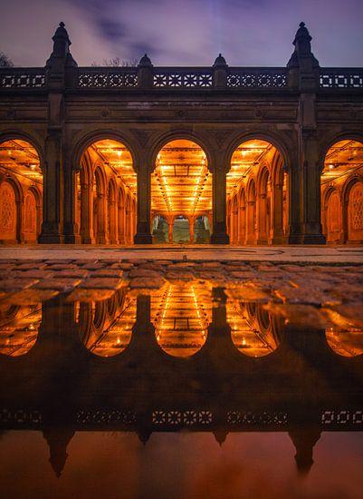 Enter the reflection