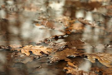 Herfstblad in plas van Astrid Brouwers