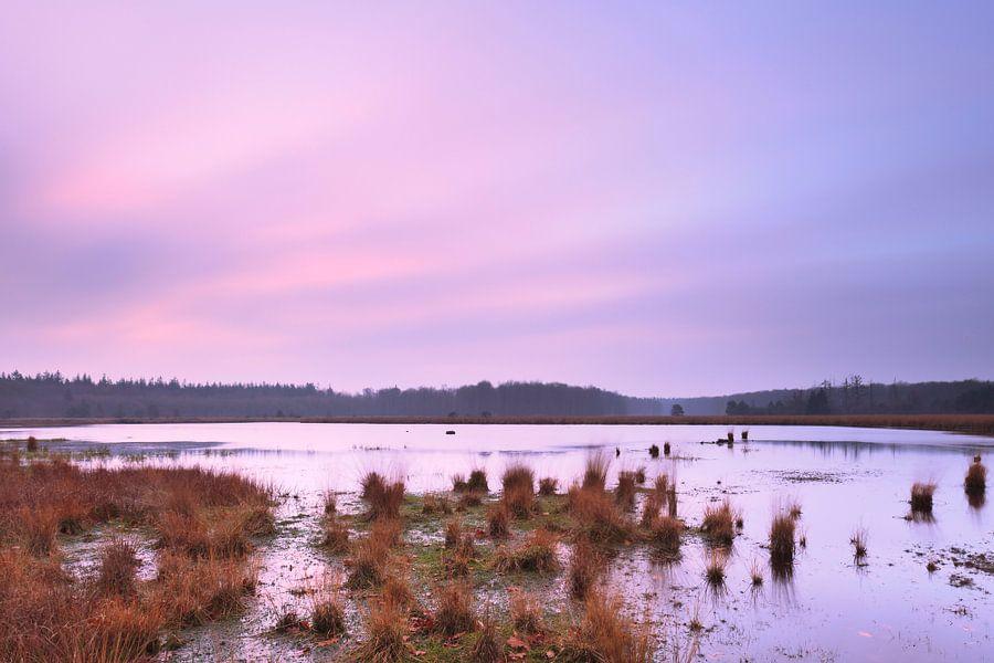 Roze lucht boven het veen