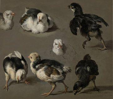 Zeven kuikens - Melchior d'Hondecoeter van