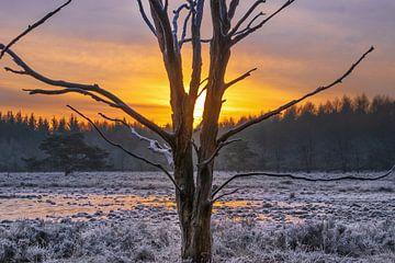 Een frisse morgen met opkomende zon van Miranda Heemskerk