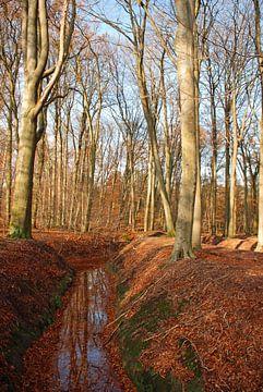 Als de blaadjes zijn gevallen... in het bos. van Fred Fiets