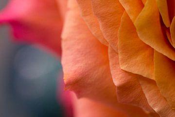 De verschillende lagen van schoonheid van