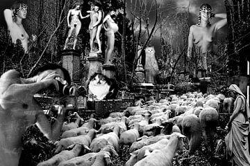 Schaapskudde op de begraafplaats van Bert Burkhardt