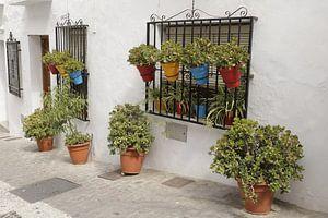 Bloempotten in een straatje in Frigliana van