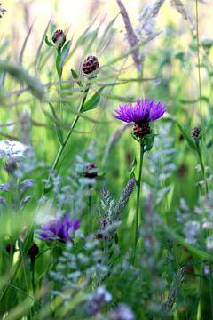Stimmungsvolles Foto lila Blume in Blume Mischung Natur grün von Tuinhappy