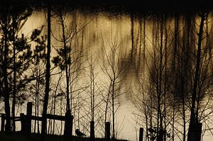 Vogel op oever met zonsondergang met reflectie van de avondzon en bomen op de achtergrond