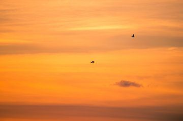 ciel orange sur Richard Steenvoorden
