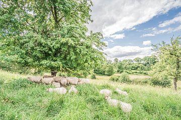 Schafe auf der Wiese von Hennie Zeij