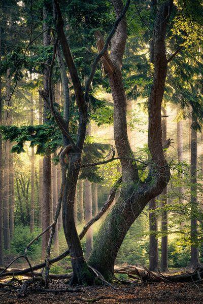 De oude boom van Edwin Mooijaart
