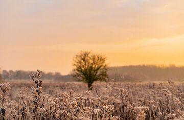 Sonnenaufgang Natur von Michael van der Tas